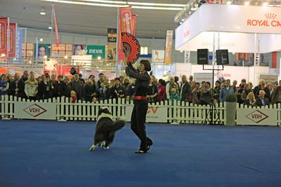 3. German Open und Crufts-Qualifikation für 2014  Dog Dancing German Open 2013 Monika Gehrke mit Gigolo Jan - Border Collie