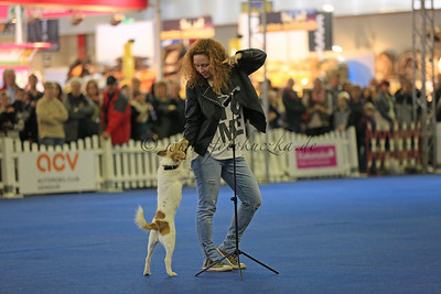 3. German Open und Crufts-Qualifikation für 2014  Dog Dancing German Open 2013 Lisa Joachimsky mit Foxita