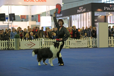3. German Open und Crufts-Qualifikation für 2014  Dog Dancing German Open 2013 Monika Gehrke mit Gigolo Jan - Border Collie