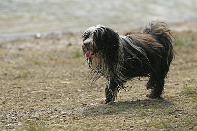 Hundespaziergang an der Glörtalsperre