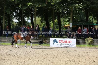 16.08.2014  CAVALLO Academy
