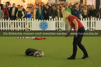 """18.10.2015 Hunde auf der Messe """"Hund und Pferd"""" in Dortmund"""