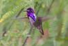 5/25/2015 - Birds and wildlife around the house