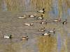 Verde River - Train & Ducks, 2/26/16