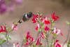 5/23-24/2015 - Birds and wildlife around the house