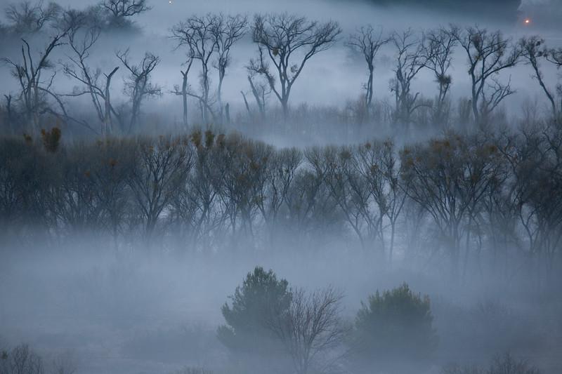 Foggy Morning, Verde River, AZ 1/28/10