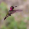 Hummingbird 4/2/10