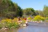 Verde River Institute Float Trip, Tapco to Tuzi, 10/10/15
