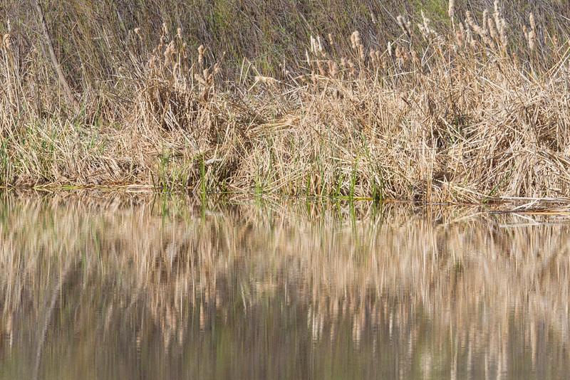 Verde River at TuziRAP, 3/14/15