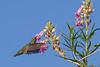 6/4-6/6/2015 - Birds around the house