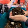 Growing Places in Leominster held a vermicomposting basics class on Saturday, February 9, 2019 at The Doyle Room at the Doyle Conservation Area in Leominster. Vermicomposting, or composting with worms, can be done in a worm bin in the comfort of your home. Participant in the class Larry Gianakis of Leominster gets a mound of worms as he builds his worm bin to take home during the workshop. SENTINEL & ENTERPRISE/JOHN LOVE