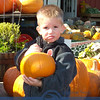 Logan Bourisseau contemplating IF this is the right pumpkin to take home.