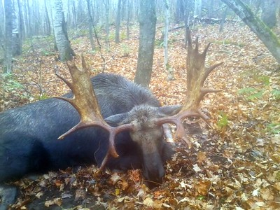 "2013 - Mark Poro, Windsor Co., 776 lbs., 49 1/2"" spread."