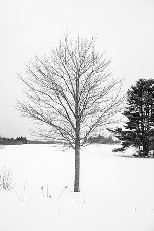 Winter Tree / Norwich, Vermont