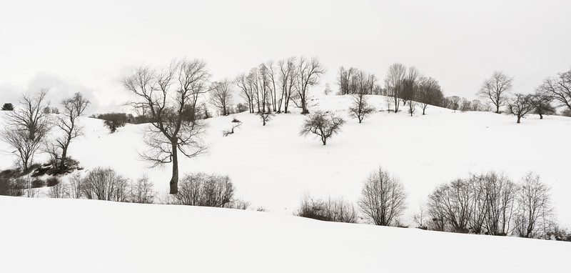 Winter Hillside 1 / Pomfret, Vermont