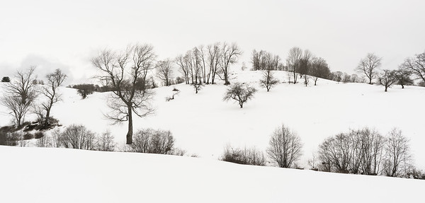 Winter Hillside / Pomfret, Vermont