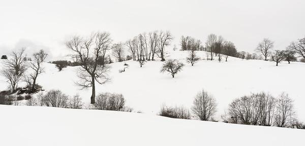 Winter Hillside 1 / Pomfret, Vermont