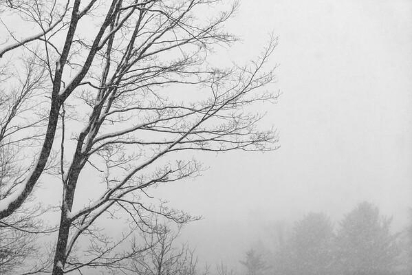 Winter Storm Stella / Norwich, Vermont