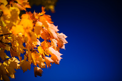 Autumn Leaves and Sky / Norwich, Vermont