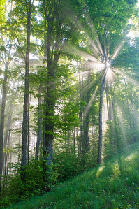 Light Rays and Trees / Royalton, Vermont