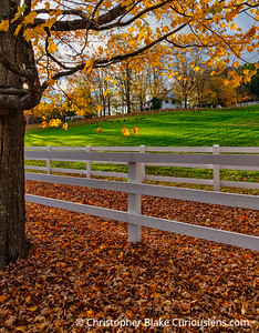 Tree and Fence