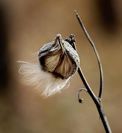 """""""Silky Breeze"""" taken at Dead Creek in Addison , VT"""