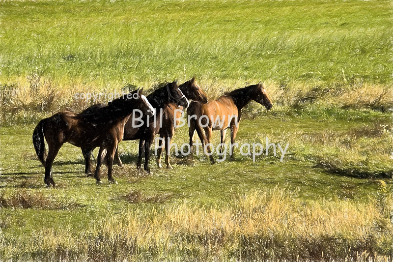 Horses in West Arlington