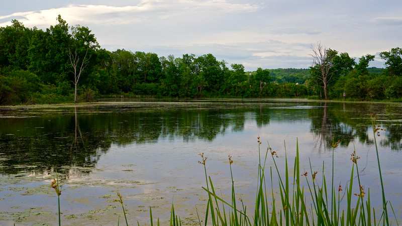 Western Vermont Wetlands
