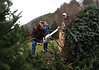 HOLLY PELCZYNSKI - BENNINGTON BANNER Martin Tobin, of Arlington cuts down a Fraser fir tree designated for the Vermont Veterans Home at the residence of Don Keelan on Monday morning in Arlington. The Christmas trees have been donated by Keelan for over 10 years