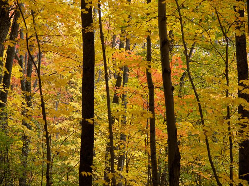 Foliage walk, Waterbury State Park, Vermont