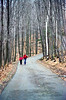 Vermont walk, late fall mount philo