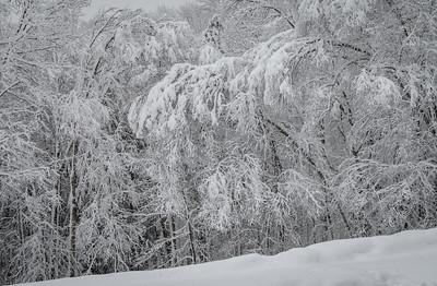 November 2018 Snowfall-_5009220