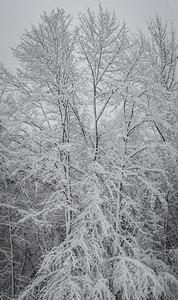 November 2018 Snowfall-_5009223