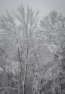 November 2018 Snowfall-_5009222