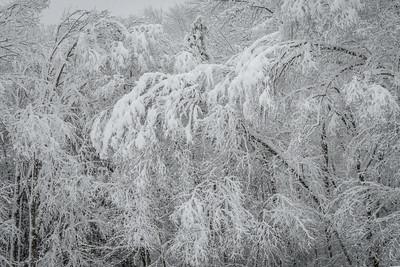 November 2018 Snowfall-_5009226