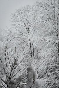 November 2018 Snowfall-_5009225