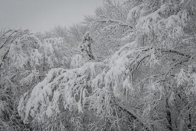 November 2018 Snowfall-_5009224