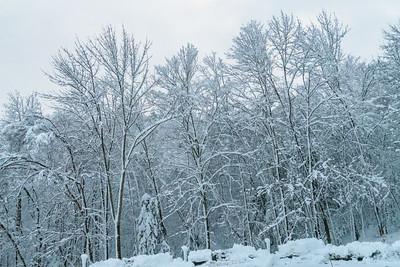 November 2018 Snowfall-_5009235