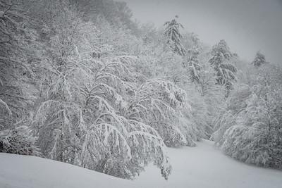 November 2018 Snowfall-_5009232