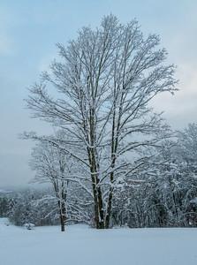 November 2018 Snowfall-_5009233