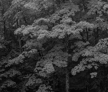 Rain Forest-8506025