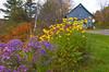 Wildflowers in autumn in rural Vermont, USA.