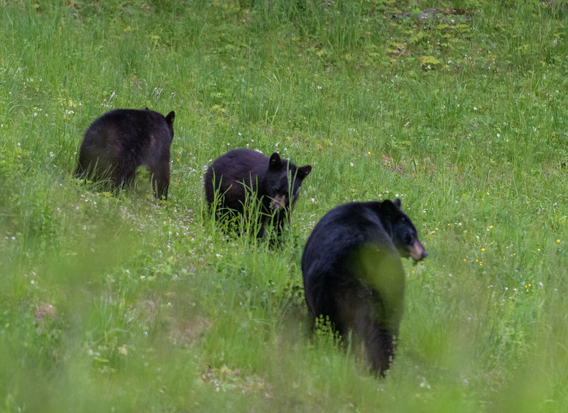 Seaver Hill Bear Family-_8505759