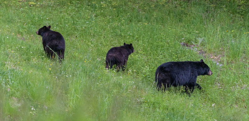 Seaver Hill Bear Family-_8505764