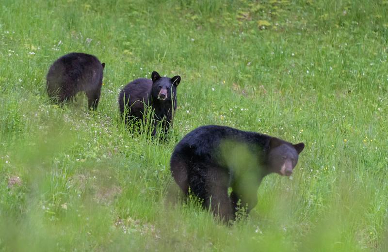 Seaver Hill Bear Family-_8505760