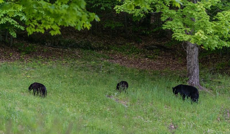 Seaver Hill Bear Family-_8505766