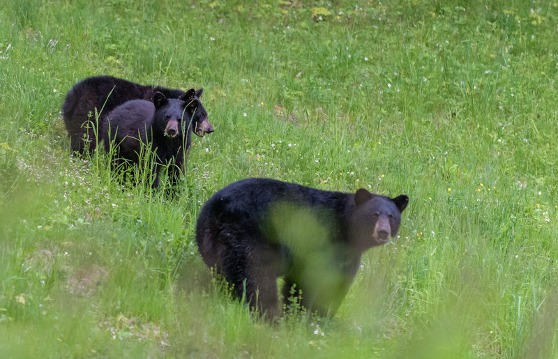 Seaver Hill Bear Family-_8505762