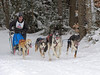 "Lots of mixed breeds for these short-course ""dash"" races.  German Short Haired Pointer / Huskies and even Greyhound / Huskies"