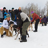 Another 8 dog sled at the start.  This one has a lot of helpers to keep the excited dogs from tangling.