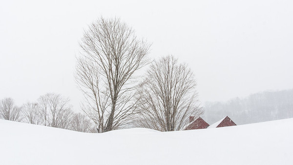 Red Barns & Trees in Snow